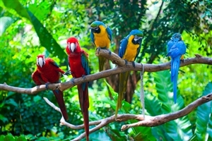 Beautiful Red and Blue Parrot HD Photo Background