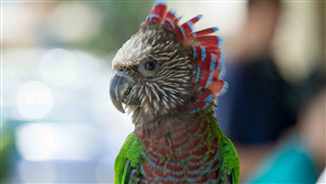 Charming Parrot Baby 5K Wallpaper