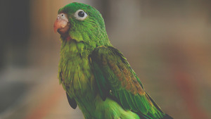 Green Parrot HD Pictures