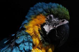 HD Parrot Face Wallpaper