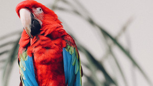 Keen Colorful Macaw Parrot 4K Images