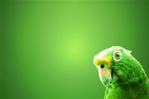 Nice Green Parrot Wide Wallpapers Free Download