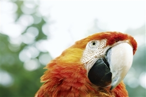 Nice Parrot Bill Close Up Image Pic