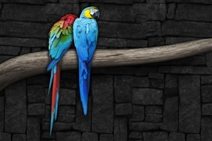 Pair of Colorful Parrots Bird on Branch Wallpapers