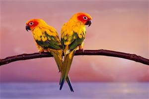 Two Colorful Parrots Sit Crossing on Branch