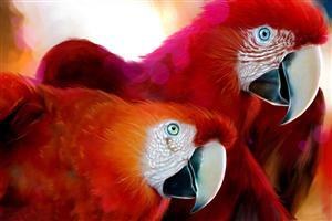 Two Red beautiful Parrots
