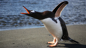 Bird Penguin Enjoy in Beach