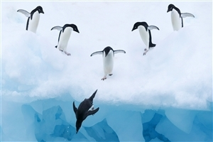 Birds Penguin in Antarctica HD Wallpapers