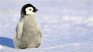 Charming Penguin Baby