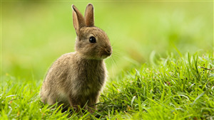 Beautiful Rabbit Photo
