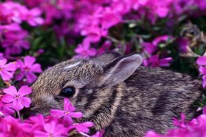 Black Rabbit with Flower Border