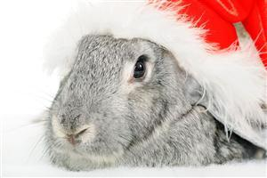 Christmas Rabbit Wallpaper