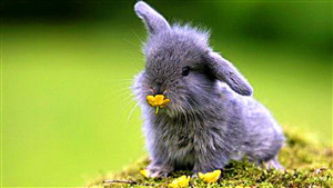 Cute Rabbit Pic