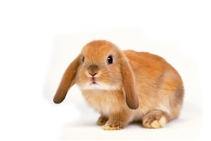 Cutest Pic of Animal Rabbit