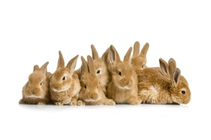 Group of Rabbit Wallpaper