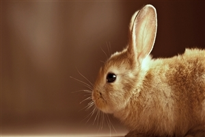 HD Image of Rabbit Animal