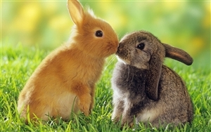 Lovely Rabbit Kiss Together