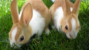 Photo of 2 Lovely Rabbit