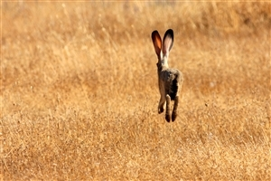 Rabbit Running Fast Photo