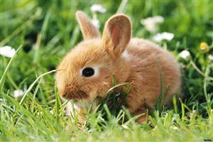 Small Rabbit on Grass