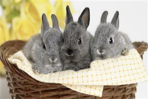Three Cute HD Rabbit Wallpapers Free Download