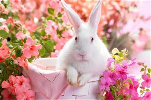 White Rabbit in Flower Pot