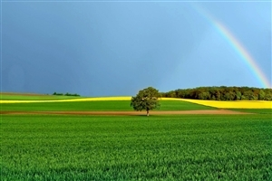 Rainbow Over the Farm Photo