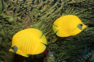 Beautiful Yellow Fish in Sea Photo