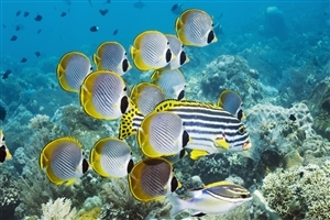 Beautiful Yellow and White Fishes under Water Photos