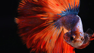 Charming Colorful Fish