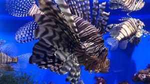289 Download 333 Views Ocean Life Fish 4K Wallpaper