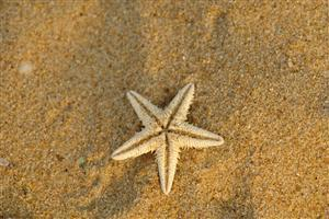 Starfish in Sea