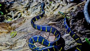 Big Blue Reptile Snake