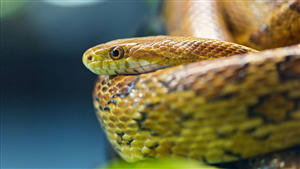 Download Pic of Anaconda Snake