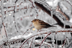 Beautiful Bird Sparrow Image