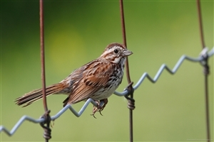 Beautiful Sparrow Bird HD Images
