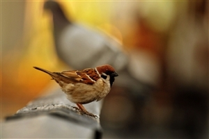 Beautiful Sparrow Bird Seating HD Wallpapers