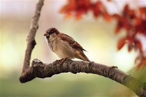 Beautiful Sparrow Sitting on Tree Branch