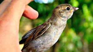 Sparrow Bird Baby Child HD Photo