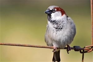 Sparrow Bird Closeup Photography