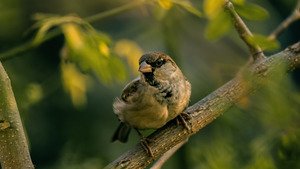 Sparrow Bird on Tree 5K Images