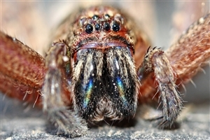 Animal Spider Closup Pics