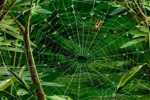 Animal Spider HD Image