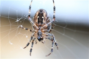 Animal Spider in Net Closeup HD Wallpaper