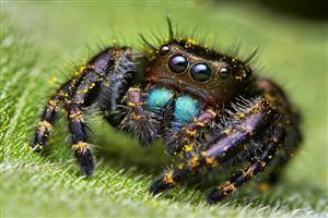 Cute Spider on Grass Wallpapers