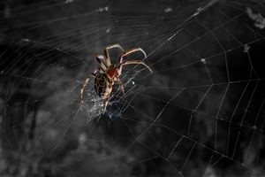 Spider on Net at Night