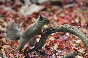 Beautiful Animal Squirrel HD Images