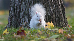 Charming White Squirrel