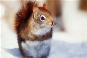 Cute Nice Squirrel Wallpaper Free Download