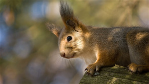 Cutest Squirrel Baby Photo